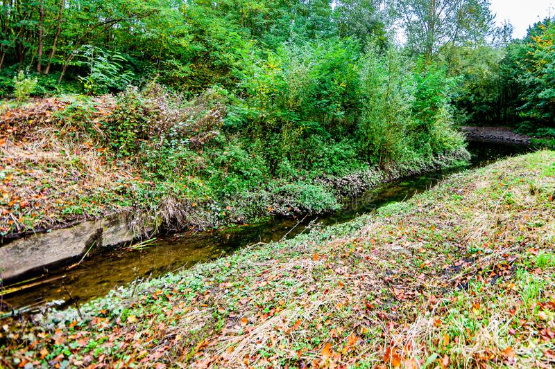 Brook in the forest with great vegetation and dry leaves royalty free stock image