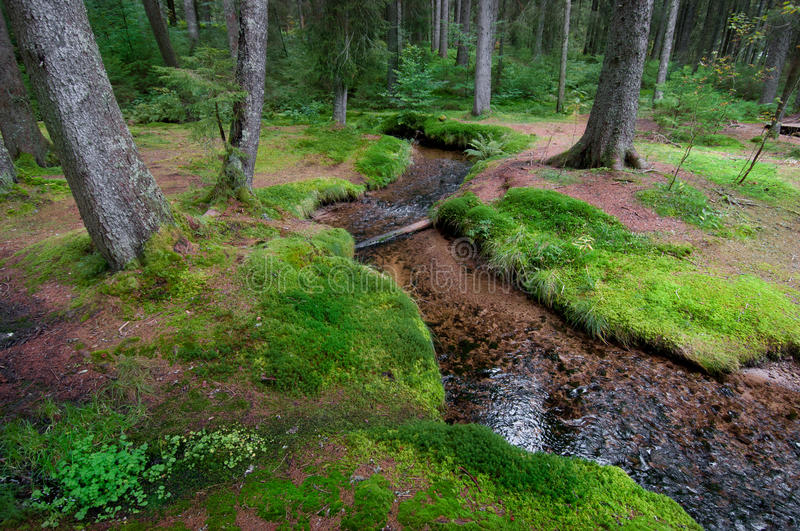 Download Brook in forest with moos stock image. Image of magic - 16394907