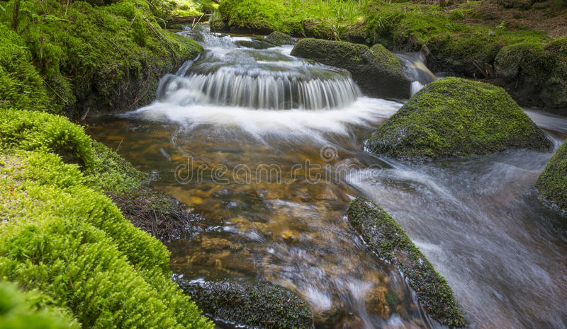 Brook in forest royalty free stock photos
