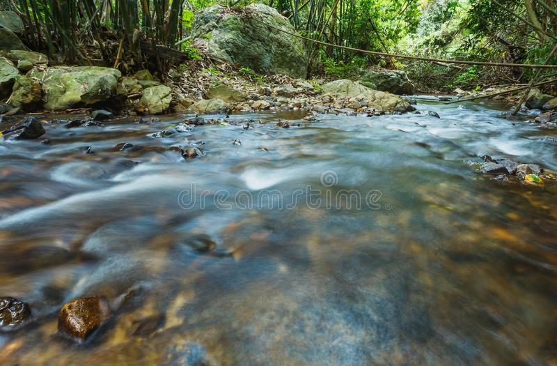Brook in Green Forest,Mountain stream. stock photo