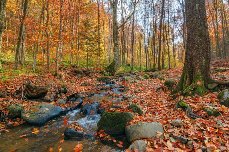 Brook among the rock in autumn forest royalty free stock image