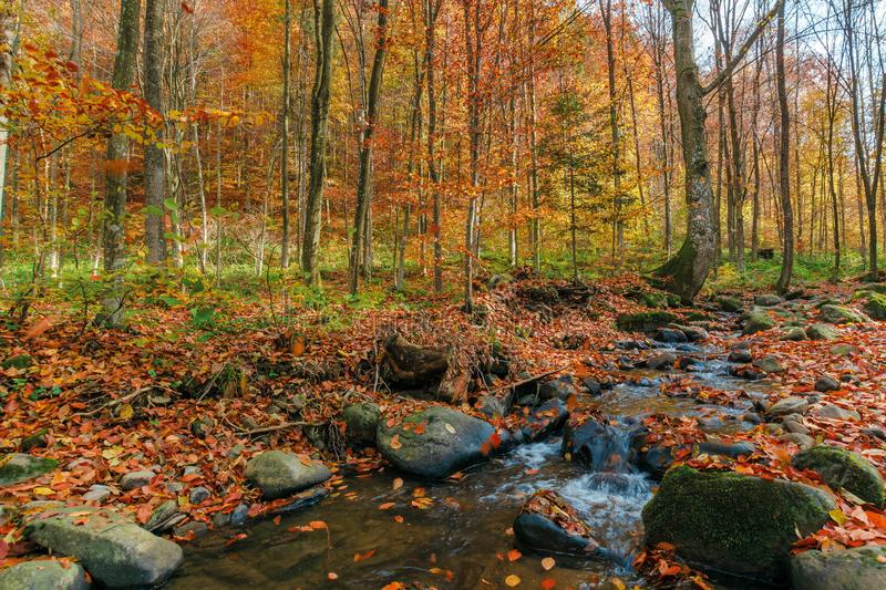 Brook among the rock in autumn forest stock photography