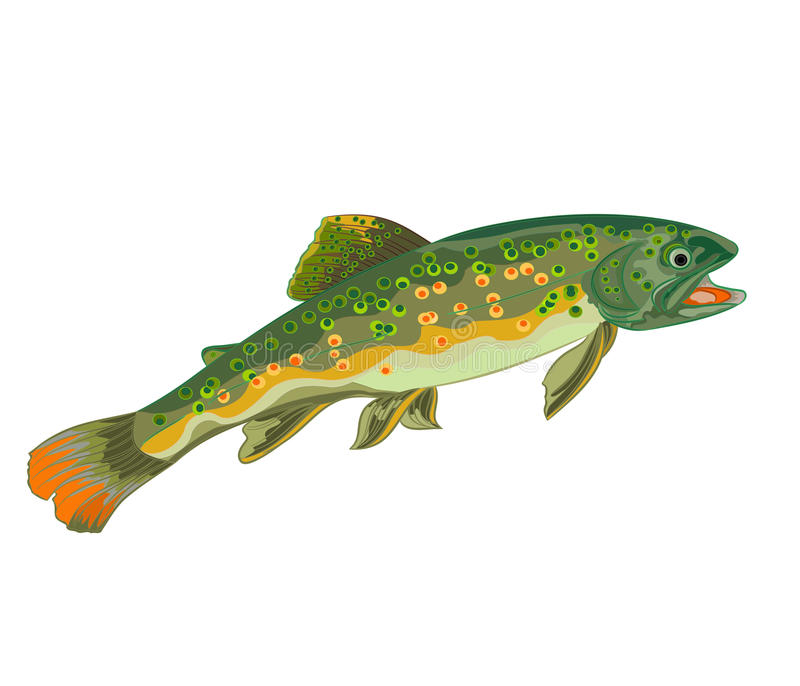 Brook trout fish. Trout fish jumping beauty wildness vector illustration stock illustration