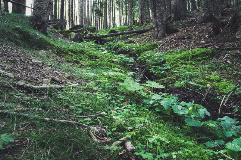 Brooklet della foresta fotografia stock libera da diritti