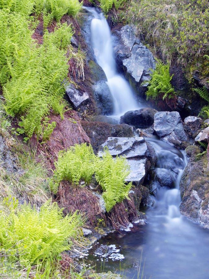 Brooklet e felce, riserva naturale di Rogen, Svezia fotografia stock libera da diritti