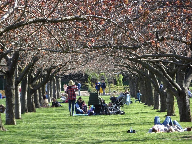 Brooklyn Botanic Garden April 2016 Part 3 13. Brooklyn Botanic Garden (BBG) is a botanical garden in the borough of Brooklyn in New York City. Founded in 1910 stock photography