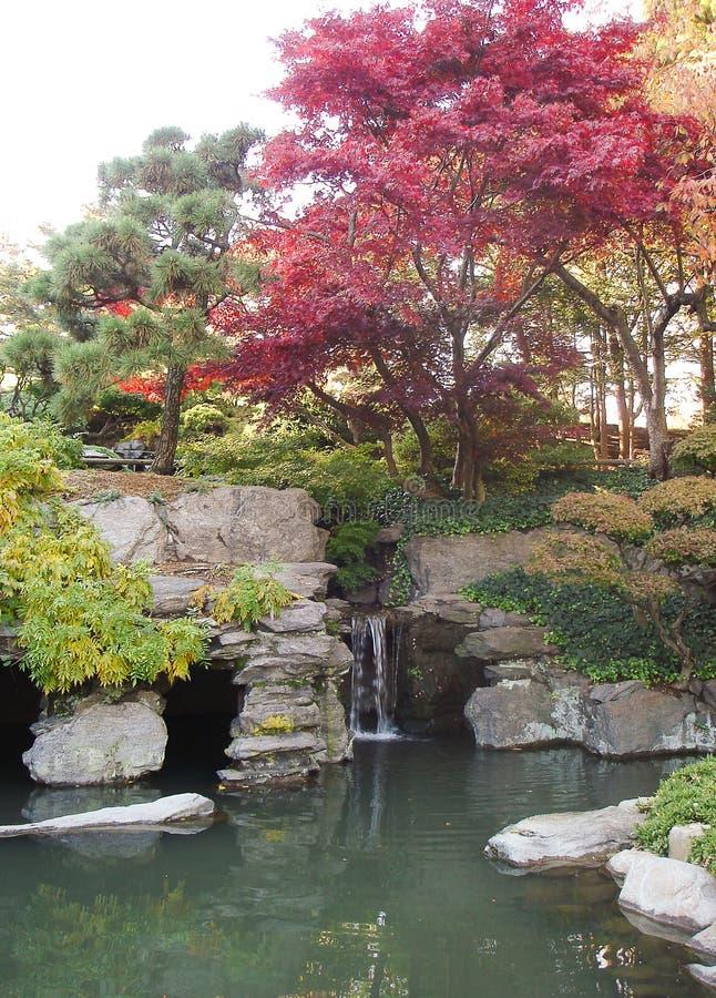 Brooklyn botanisk trädgård under nedgång arkivfoton