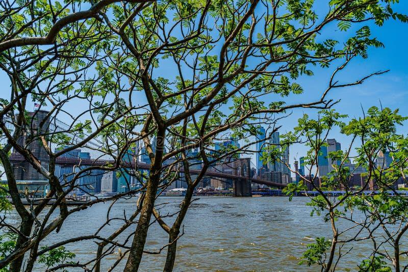 Brooklyn bro med lägre Manhattan horisont, One World Trade Center i New York City till och med den gröna lövverket av arkivfoto