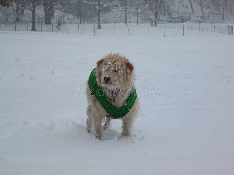 Brooklyn- Parksteigungs-Hund im Schnee lizenzfreie stockfotografie