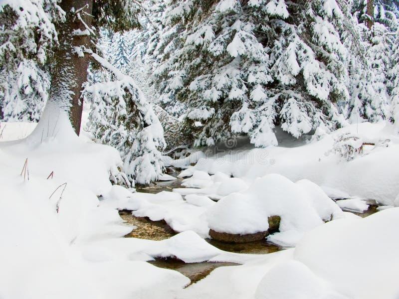 brooks sosen zimy. obraz stock