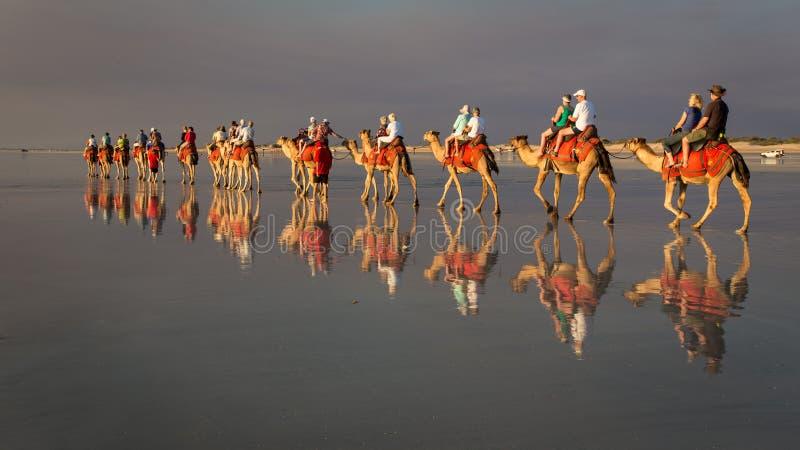 Broome, West-Australien - 11. September 2014: Kamele auf Kabel-Strand lizenzfreie stockfotografie