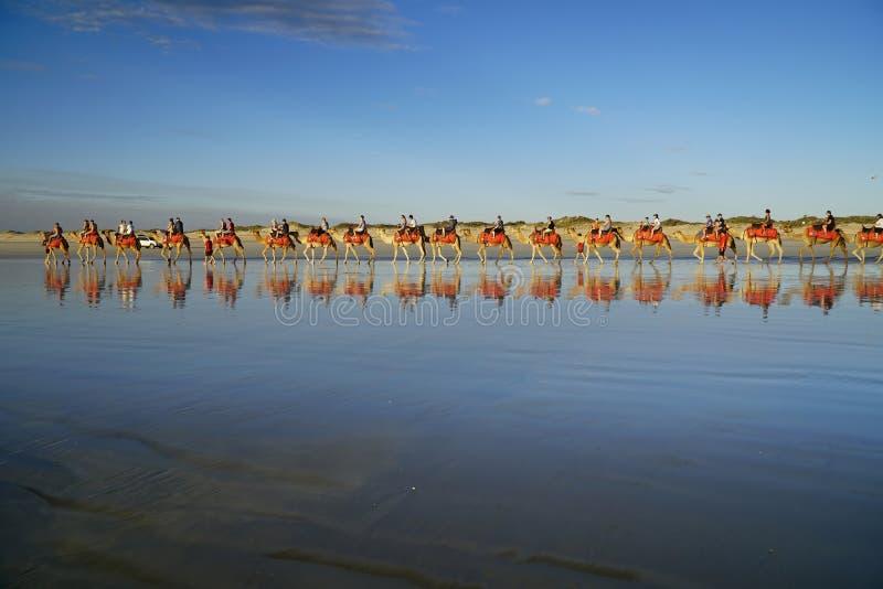 Broome zachodnia australia, turystyczni jeździeccy wielbłądy przy zmierzchem przy Depeszuje plażę obrazy stock