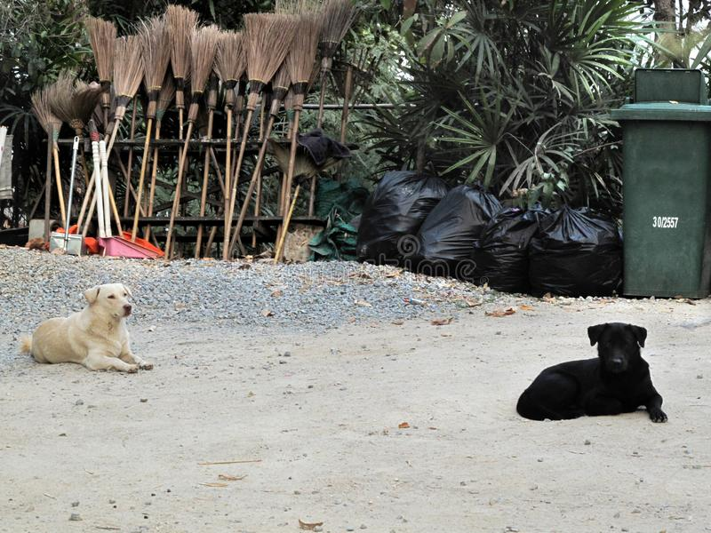 The brooms and dustpan Green trash near black bags full pack of garbage behind white dog and black dog sit on the floor. Out door in the park royalty free stock photos