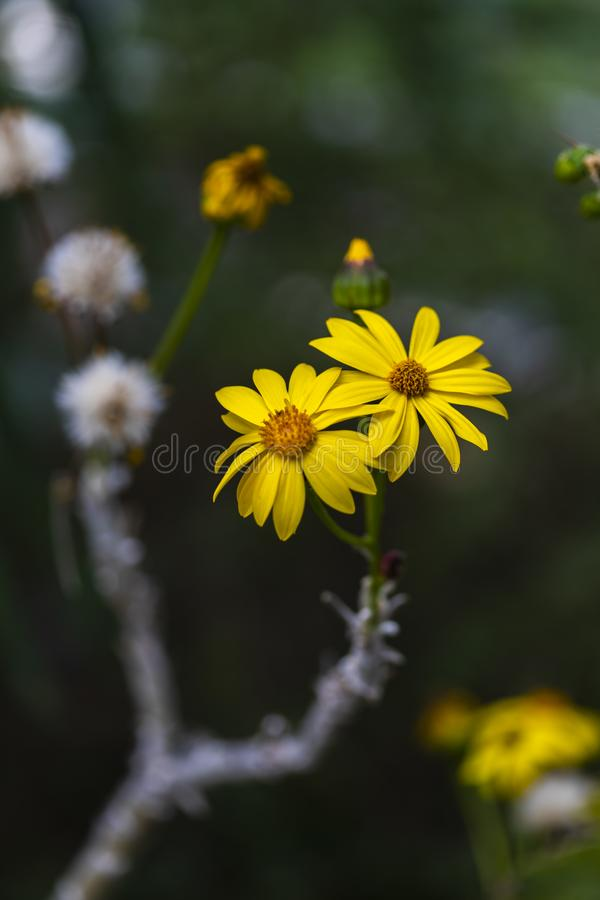 Broomstick drzewa kwiaty obraz stock