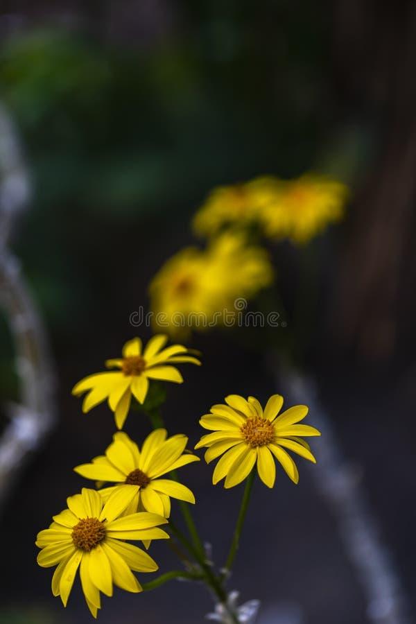 Broomstick drzewa kwiaty zdjęcia stock