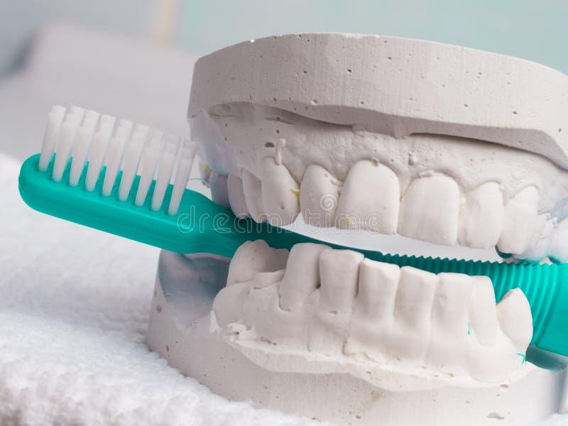 Brosse à dents verte avec du gypse dentaire photo stock