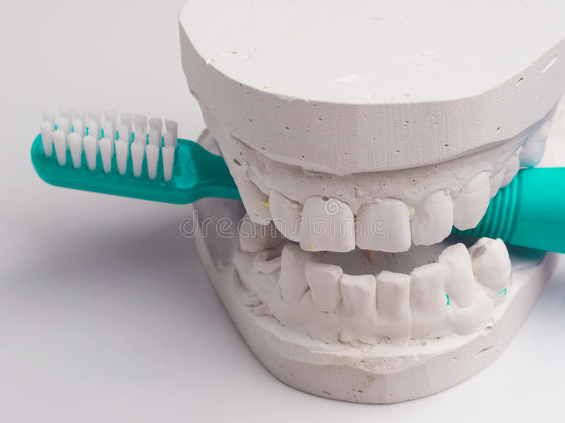 Brosse à dents verte avec du gypse dentaire photographie stock libre de droits