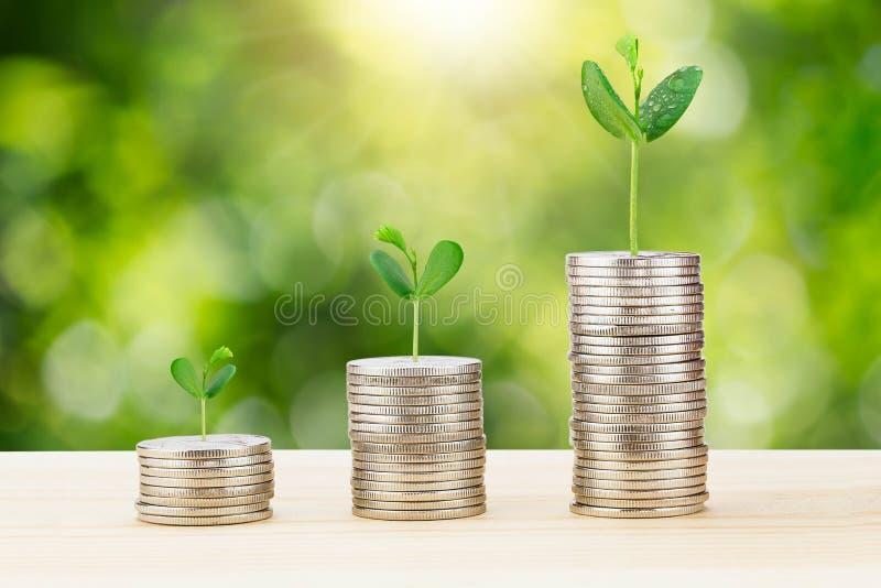 Brotar o crescimento da pilha de moedas na mesa de madeira no fundo verde borrado do bokeh imagem de stock