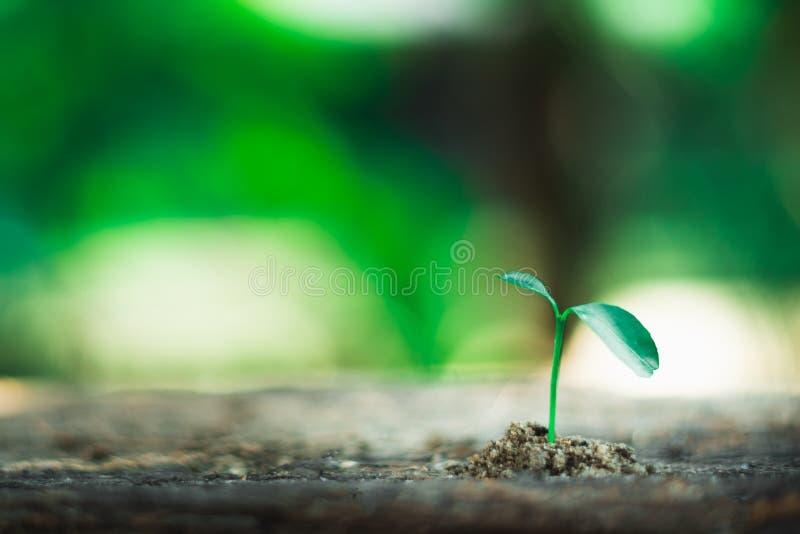 brotar o crescimento na terra foto de stock