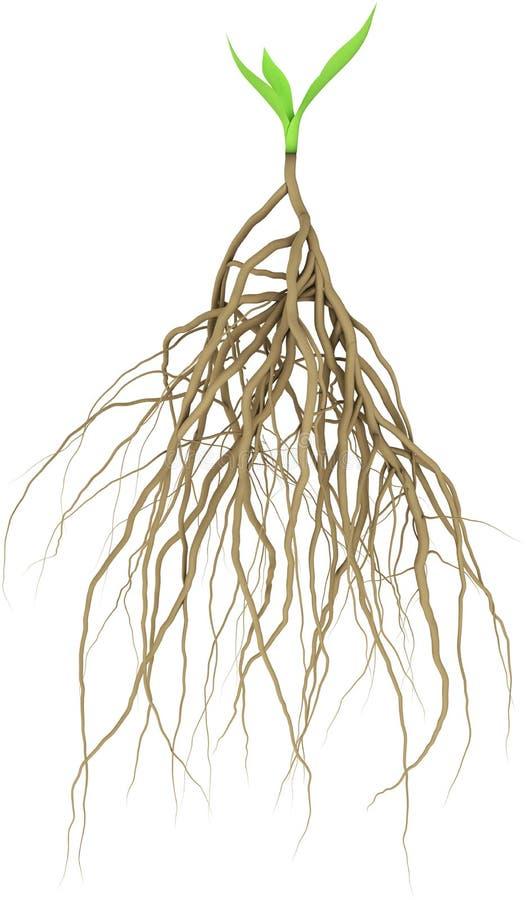 Brote con la raíz libre illustration