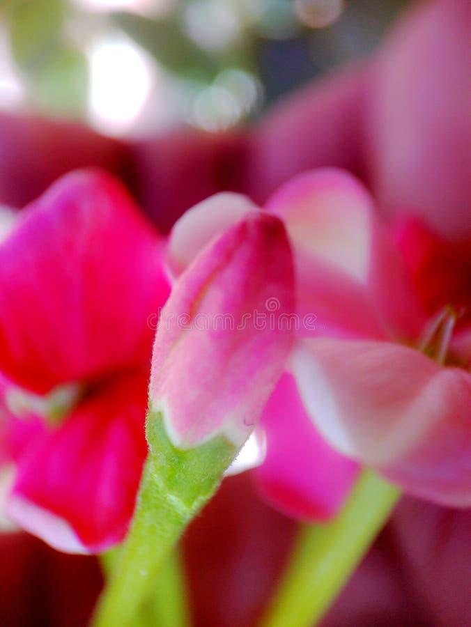 Brote de crecer de flor imágenes de archivo libres de regalías