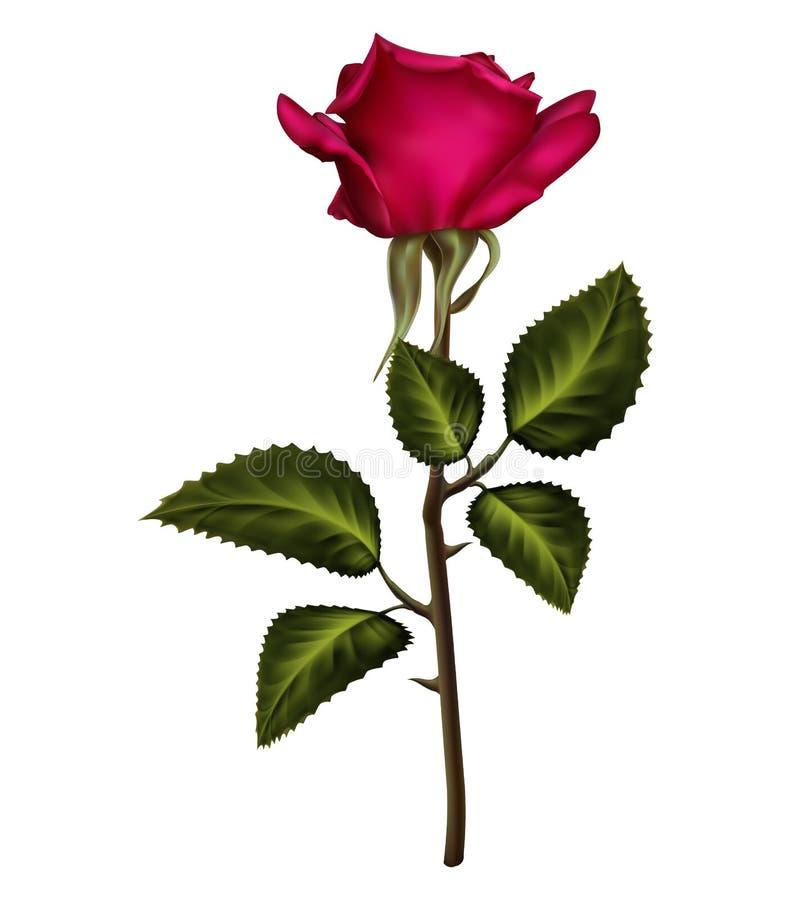 Brote de flor color de rosa del terciopelo rosado rojo con las hojas verdes stock de ilustración