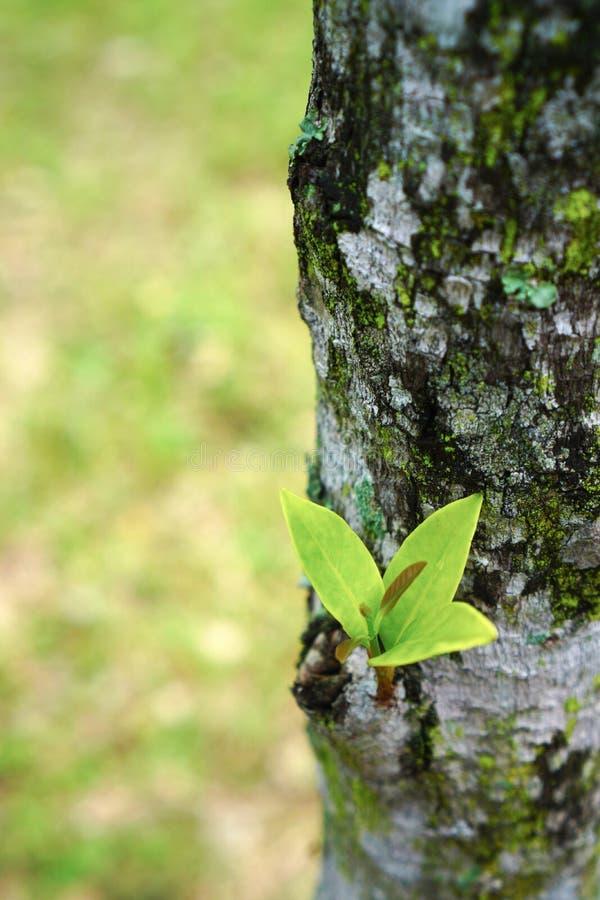 Brote del árbol foto de archivo