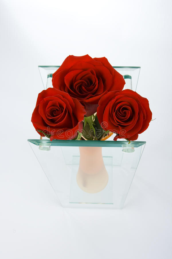 Brote rojo de rosas en el florero imagen de archivo libre de regalías