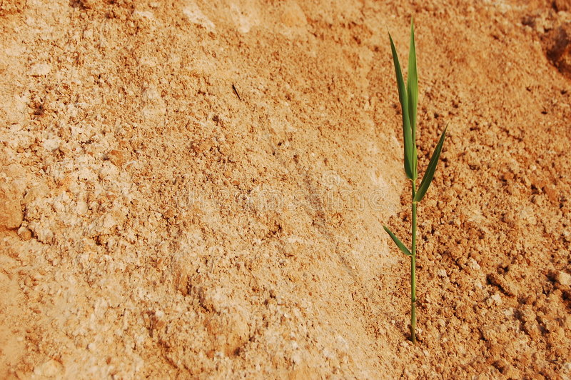 Download Brote solo imagen de archivo. Imagen de sequía, arena - 7275099