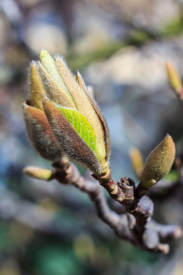Brote verde en primavera fotos de archivo