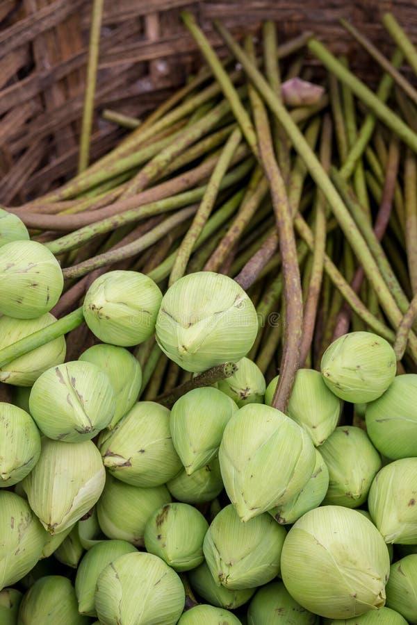 Brote verde Lotus Flowers en cesta imágenes de archivo libres de regalías