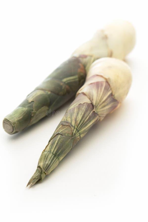 Brotes de bambú en el fondo blanco imagenes de archivo