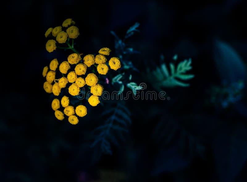 Brotes de flor amarillos minúsculos que florecen en las hojas verdes imágenes de archivo libres de regalías