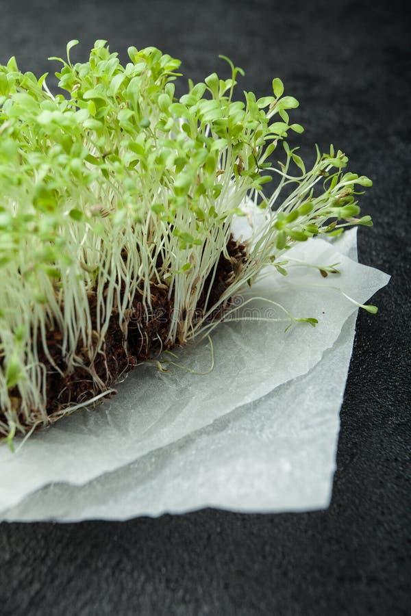 Brotes de la verdura de ensalada, micro-verdes en un fondo negro, verticalmente foto de archivo libre de regalías