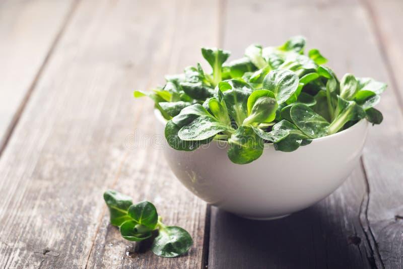Brotes frescos de una raíz joven de la ensalada verde en un cuenco blanco El concepto de una dieta sana vegetarianism Primer foto de archivo libre de regalías