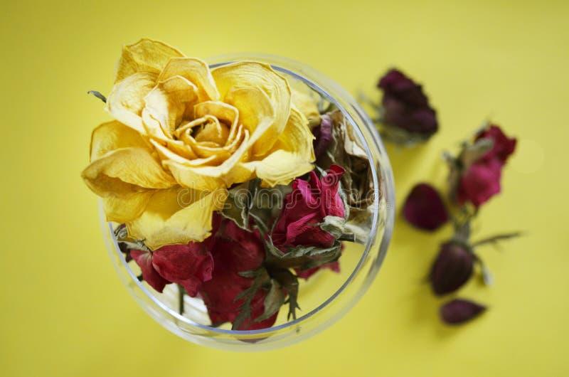 Brotes secados de la rosa del amarillo en vidrio imagen de archivo
