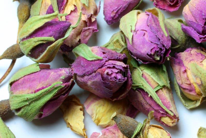 Brotes secados de Rose imagen de archivo libre de regalías