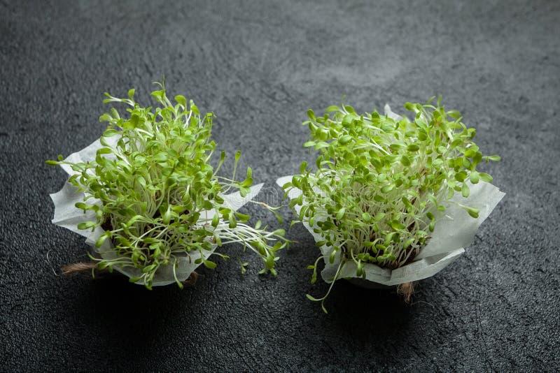 Brotes vegetales fragantes jovenes llenos de vitaminas y de energía en un fondo negro imagenes de archivo
