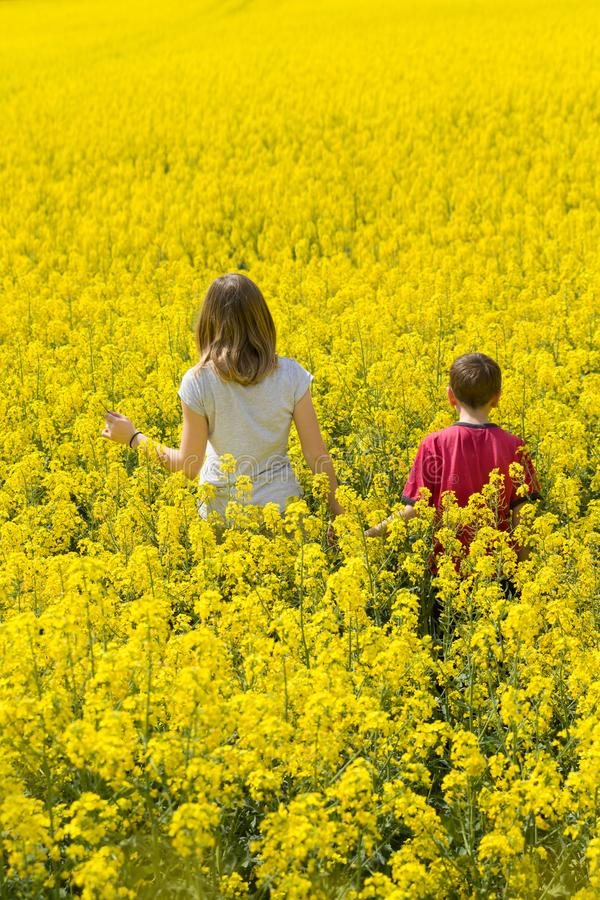 Beautiful teenage blonde girl and young brunette brother walk together, among yellow flowers, at a huge field. stock photo