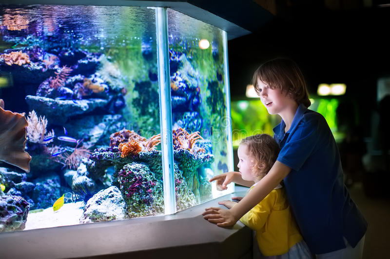 Brother and sister watching fishes in a zoo stock photo