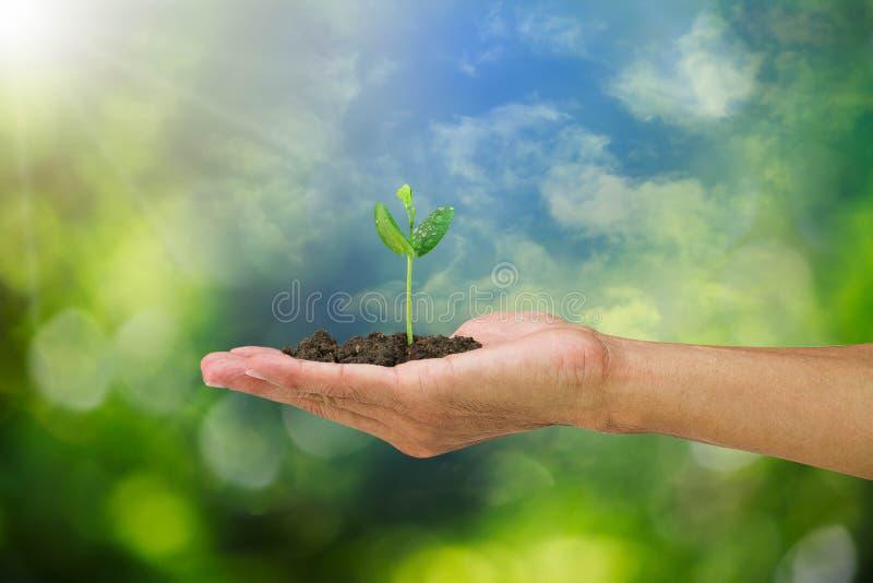 Broto da terra arrendada da mão do homem isolado no fundo verde borrado do bokeh e do céu foto de stock