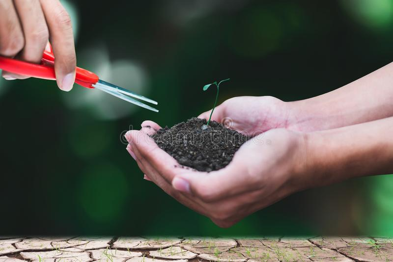 Broto da terra arrendada da mão para a natureza crescente, e uma outra mão com as tesouras que vão cortar foto de stock royalty free