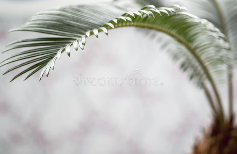 Broto das palmeiras imagem de stock