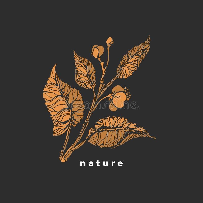 Broto do chá S?mbolo do vetor Esboce o arbusto, folha, flor ilustração royalty free