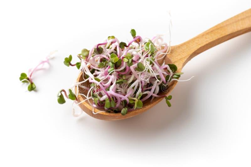 Brotos cor-de-rosa do rabanete em uma colher de madeira no fundo branco foto de stock
