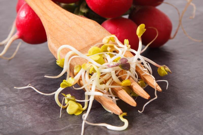 Brotos do rabanete com conceito da forquilha, o saudável e o nutritivo comer fotografia de stock