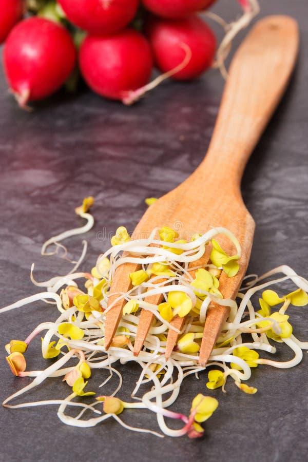Brotos do rabanete com forquilha e do vegetal no conceito do fundo, o saudável e o nutritivo comer fotografia de stock