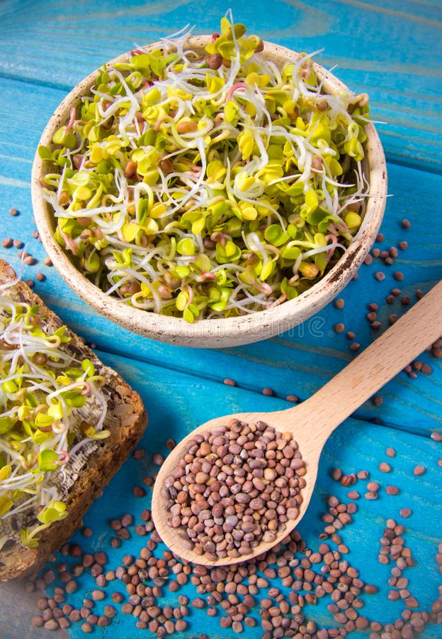 Brotos do rabanete como um ingrediente de uma dieta saudável imagem de stock