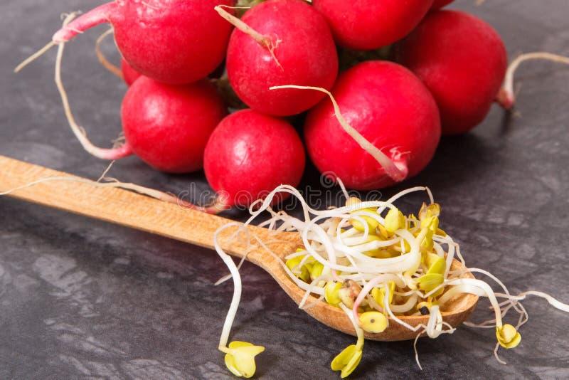Brotos do rabanete como vitaminas e minerais naturais da fonte, estilo de vida saud?vel e conceito da nutri??o imagens de stock
