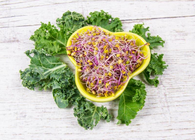 Brotos e folhas da couve como um ingrediente de uma dieta saud?vel imagem de stock royalty free